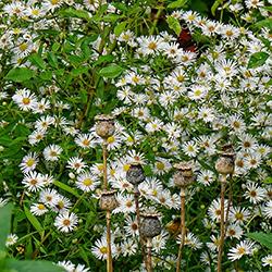 Blühende Blumen und ein Schmetterling